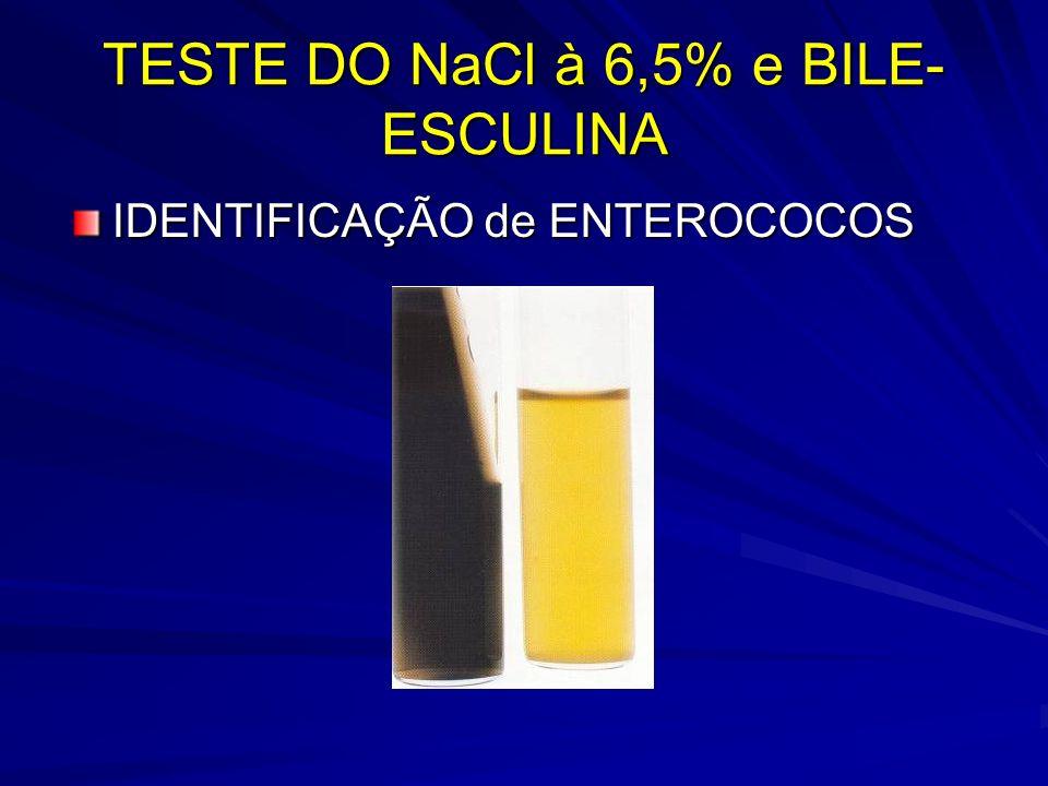 TESTE DO NaCl à 6,5% e BILE-ESCULINA