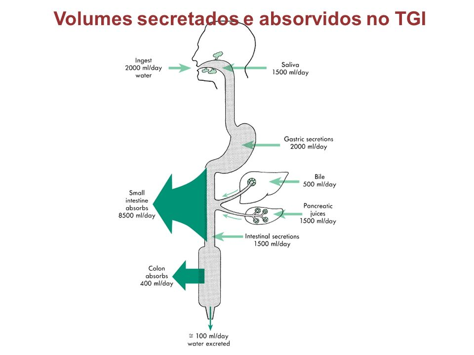 Volumes secretados e absorvidos no TGI
