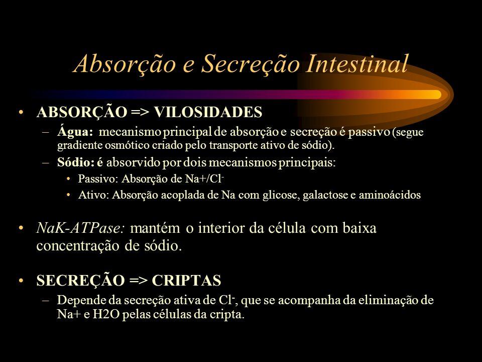 Absorção e Secreção Intestinal