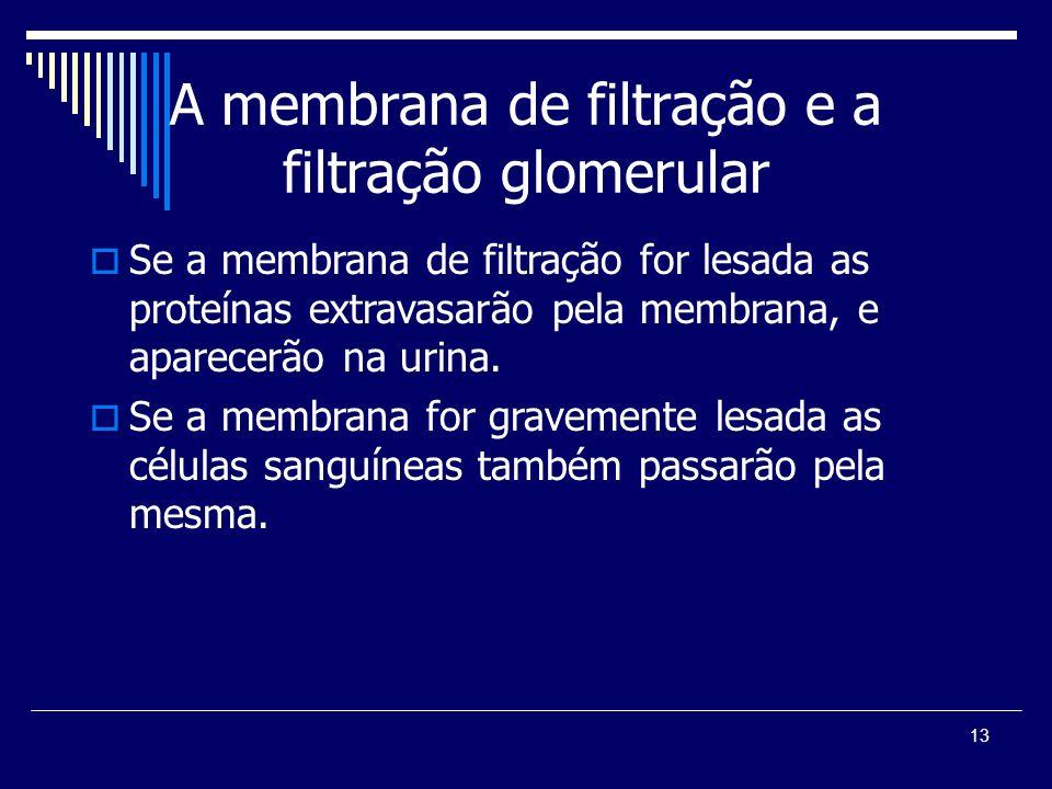 A membrana de filtração e a filtração glomerular