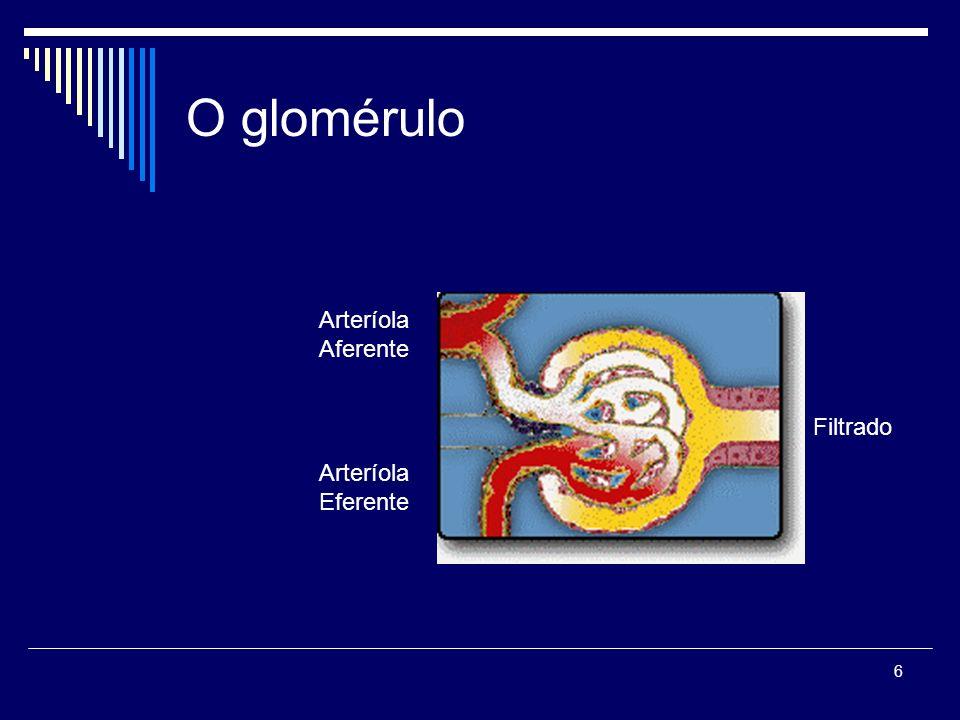 O glomérulo Arteríola Aferente Filtrado Arteríola Eferente