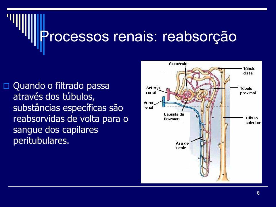 Processos renais: reabsorção