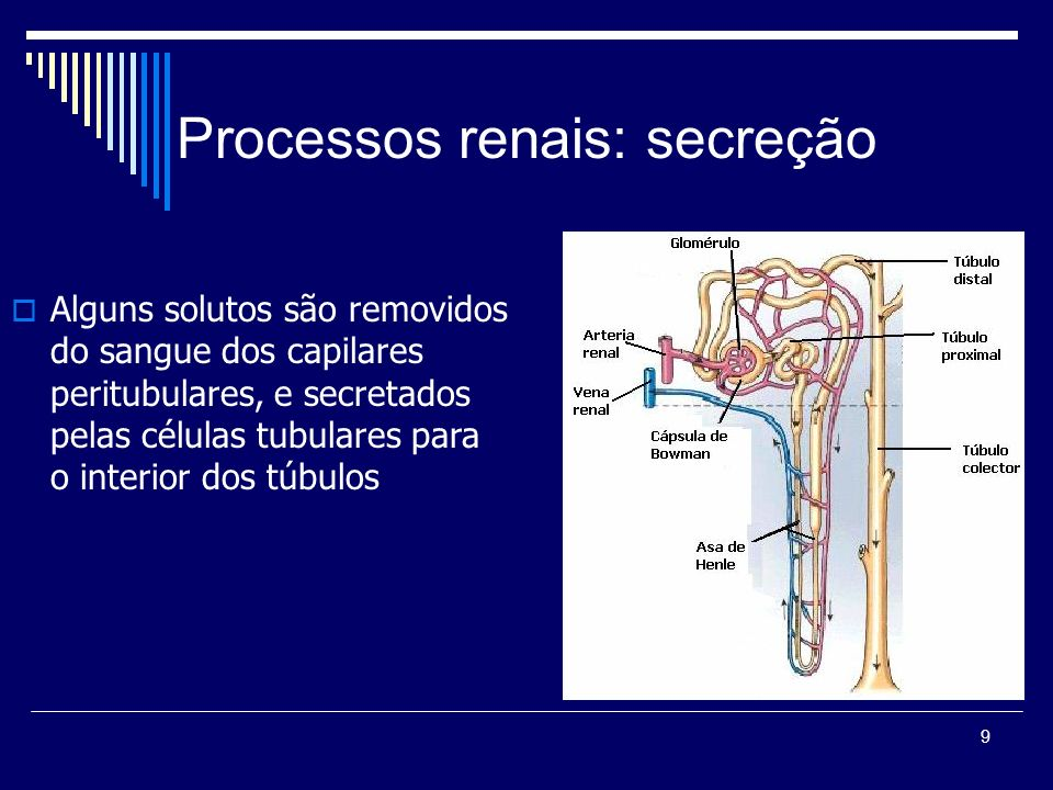 Processos renais: secreção