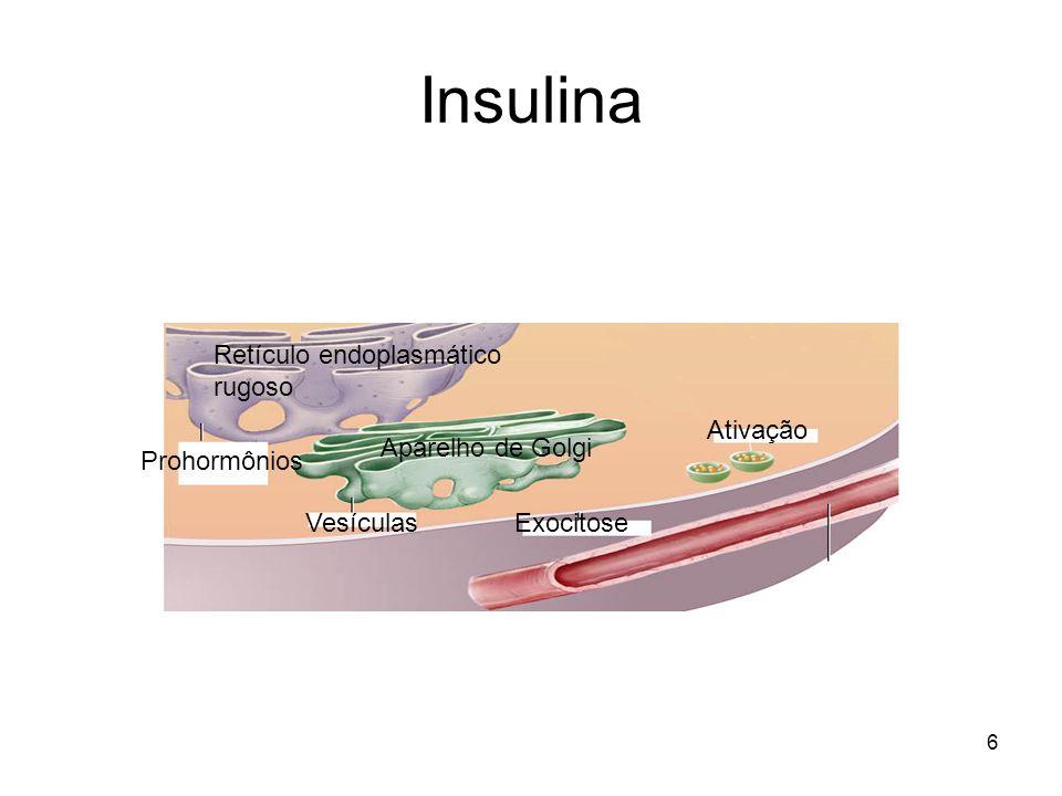 Insulina Retículo endoplasmático rugoso Ativação Aparelho de Golgi