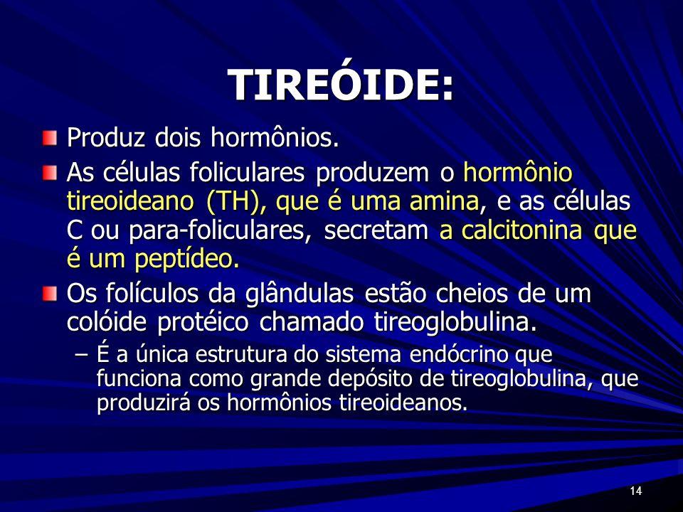 TIREÓIDE: Produz dois hormônios.