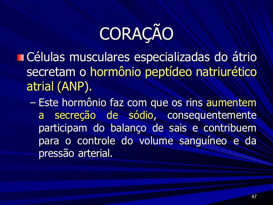 CORAÇÃOCélulas musculares especializadas do átrio secretam o hormônio peptídeo natriurético atrial (ANP).