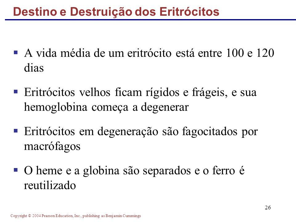 Destino e Destruição dos Eritrócitos
