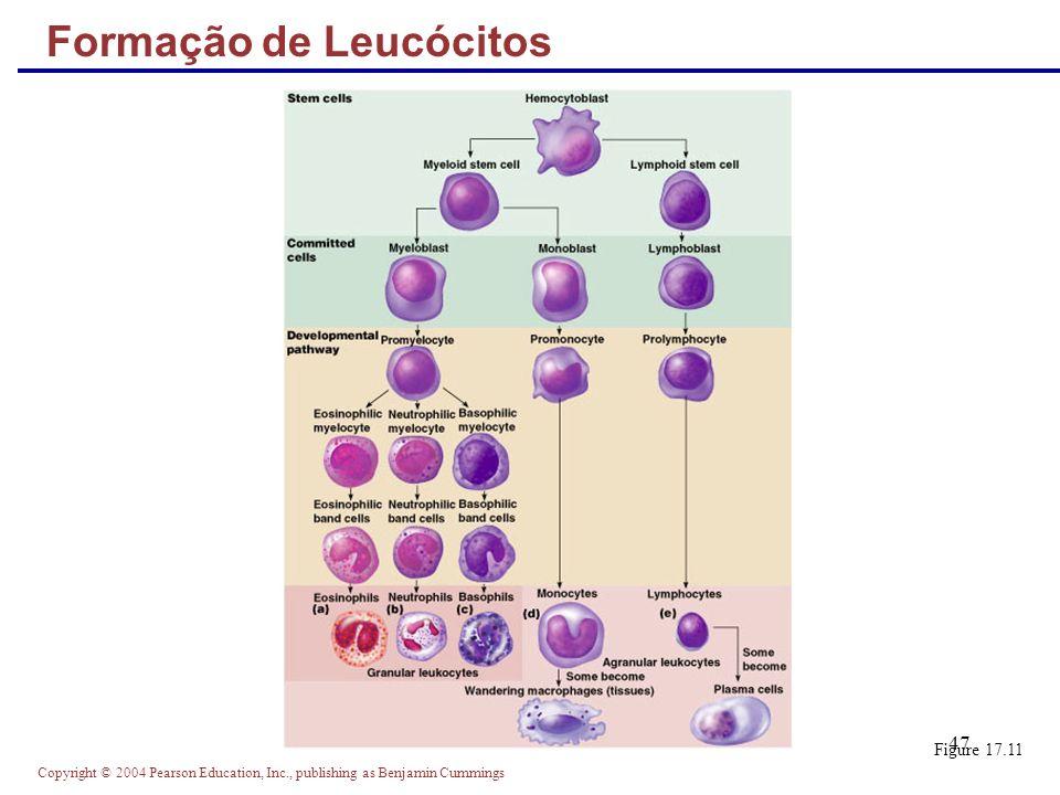 Formação de Leucócitos