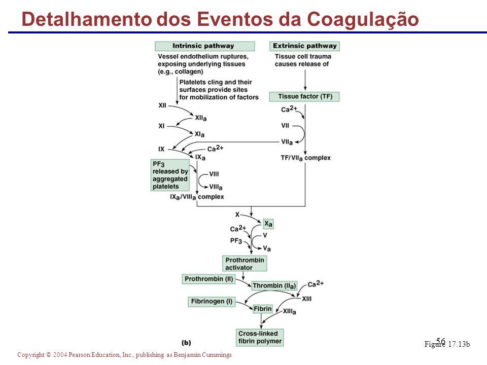 Detalhamento dos Eventos da Coagulação