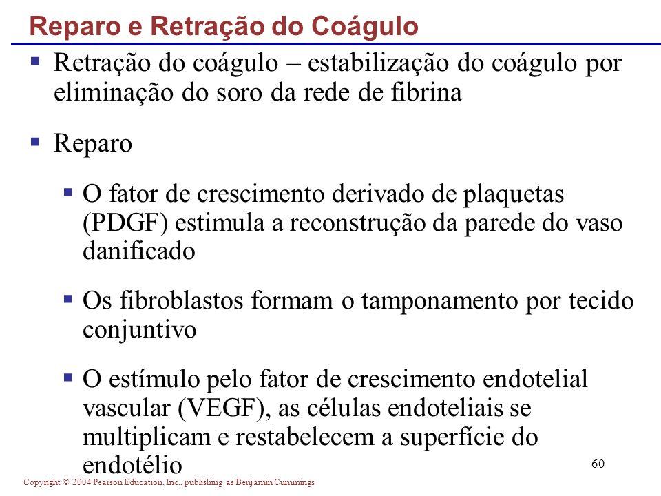 Reparo e Retração do Coágulo