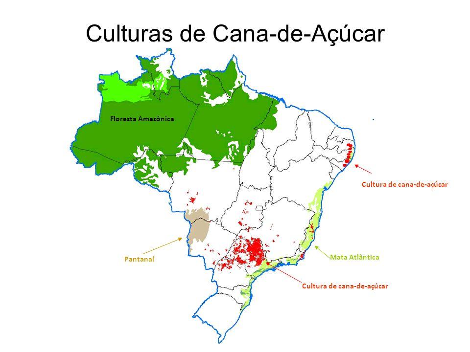 Culturas de Cana-de-Açúcar