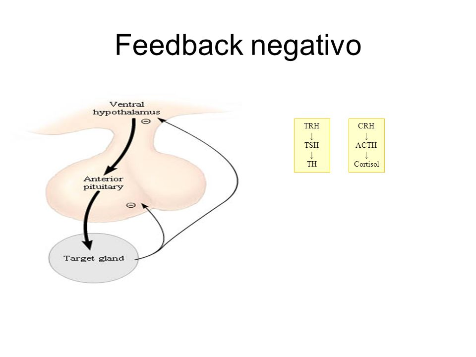 Feedback negativo TRH ↓ TSH TH CRH ↓ ACTH Cortisol