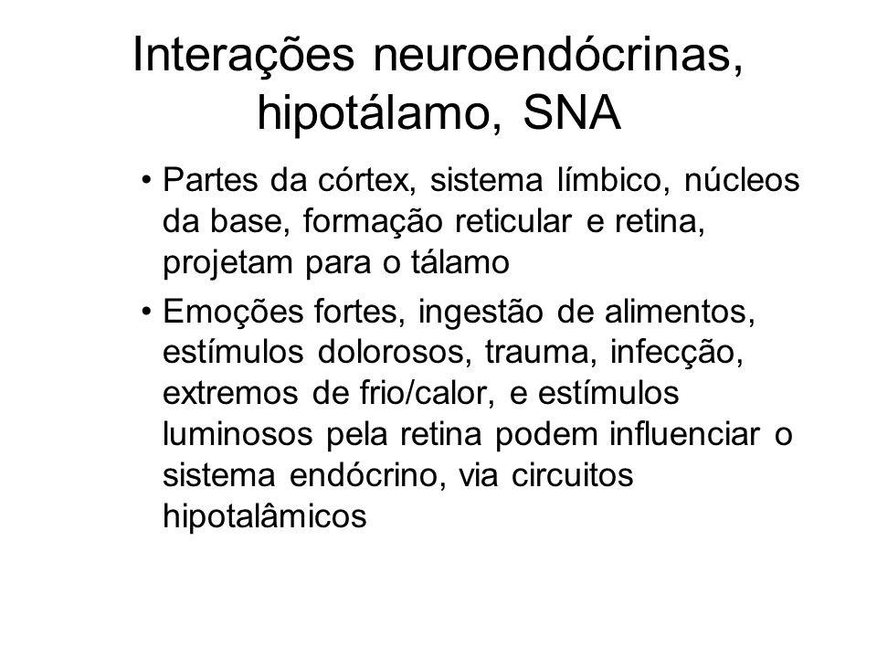 Interações neuroendócrinas, hipotálamo, SNA