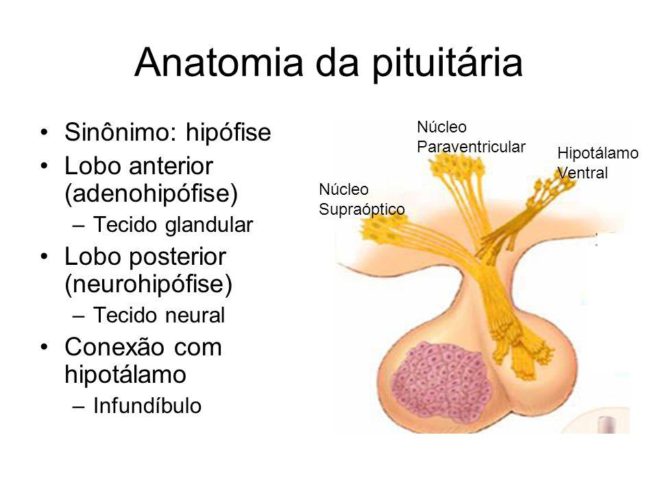 Anatomia da pituitária