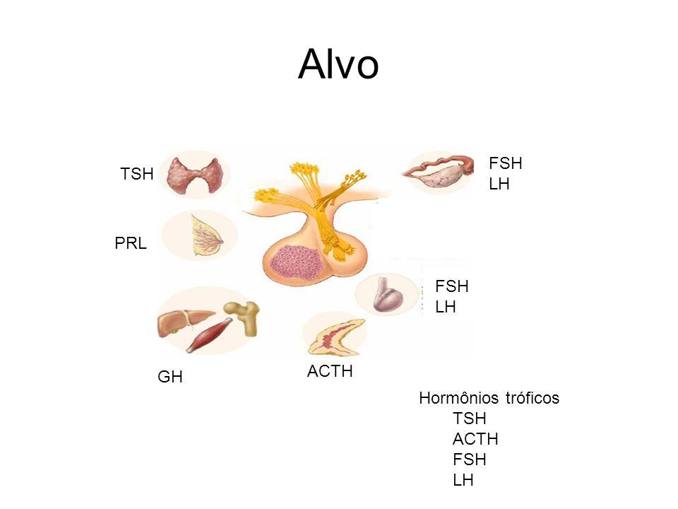 Alvo FSH LH TSH PRL FSH LH ACTH GH Hormônios tróficos TSH ACTH FSH LH