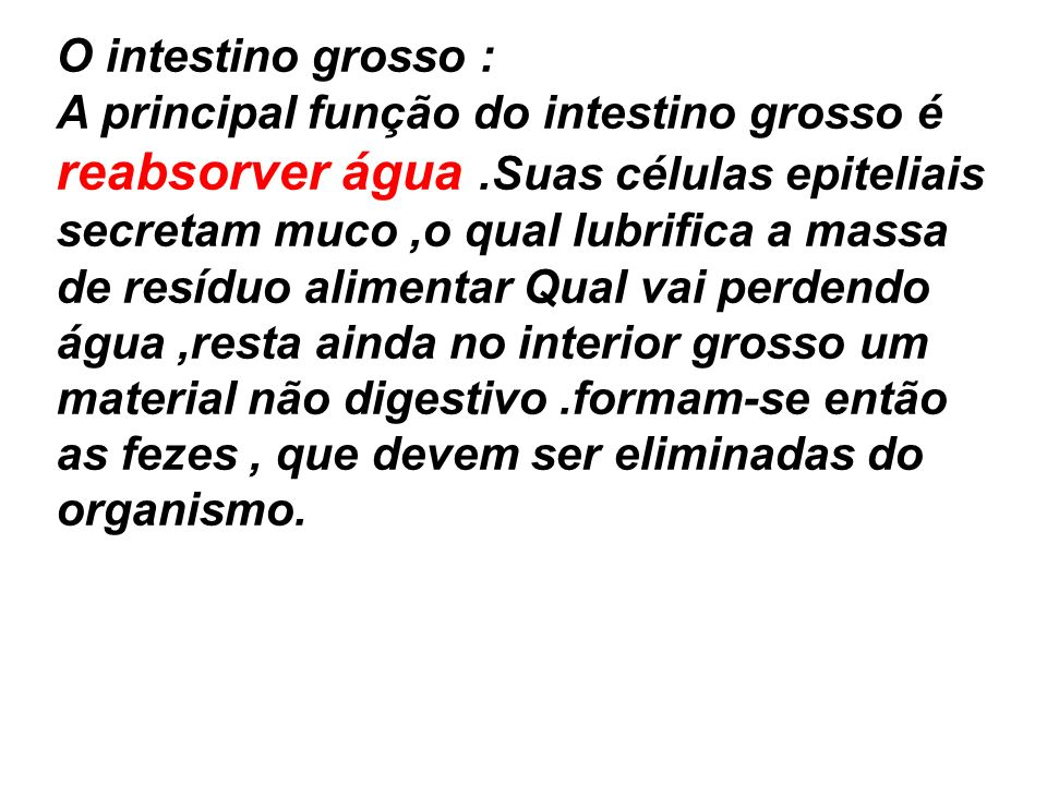 O intestino grosso :