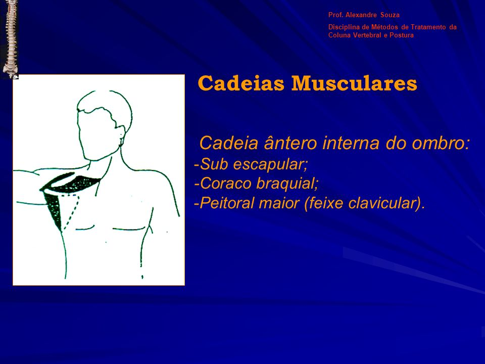 Cadeia ântero interna do ombro: