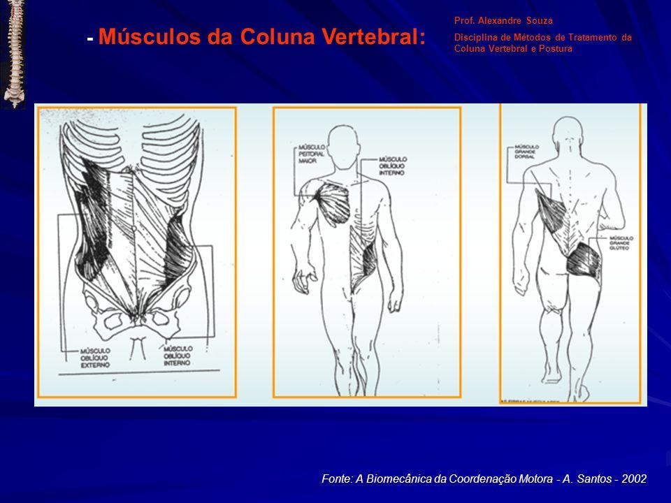 - Músculos da Coluna Vertebral: