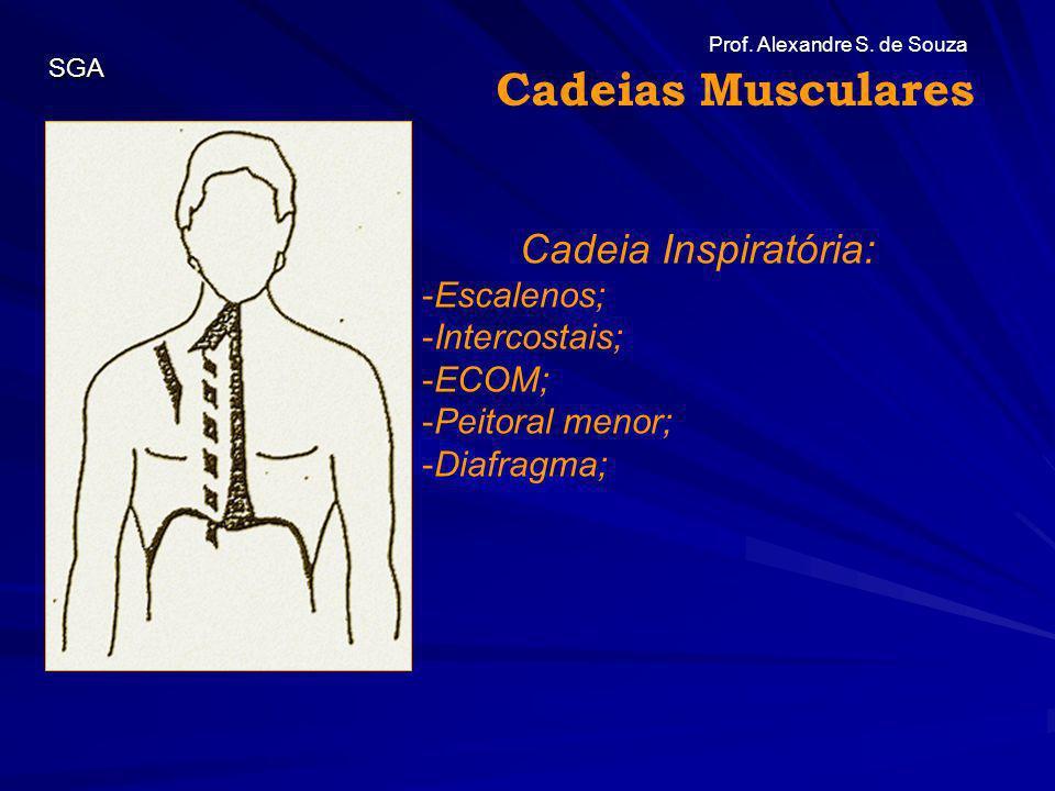 Cadeias Musculares Cadeia Inspiratória: Escalenos; Intercostais; ECOM;