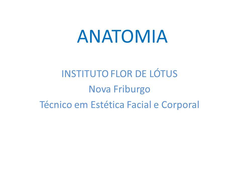 ANATOMIA INSTITUTO FLOR DE LÓTUS Nova Friburgo