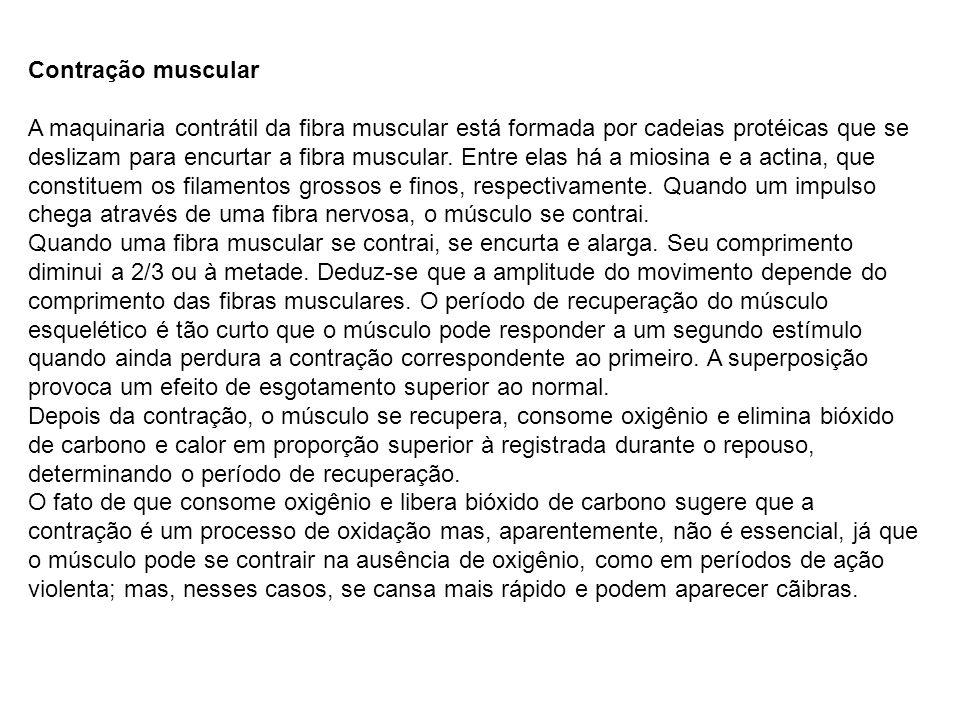 Contração muscular A maquinaria contrátil da fibra muscular está formada por cadeias protéicas que se deslizam para encurtar a fibra muscular.