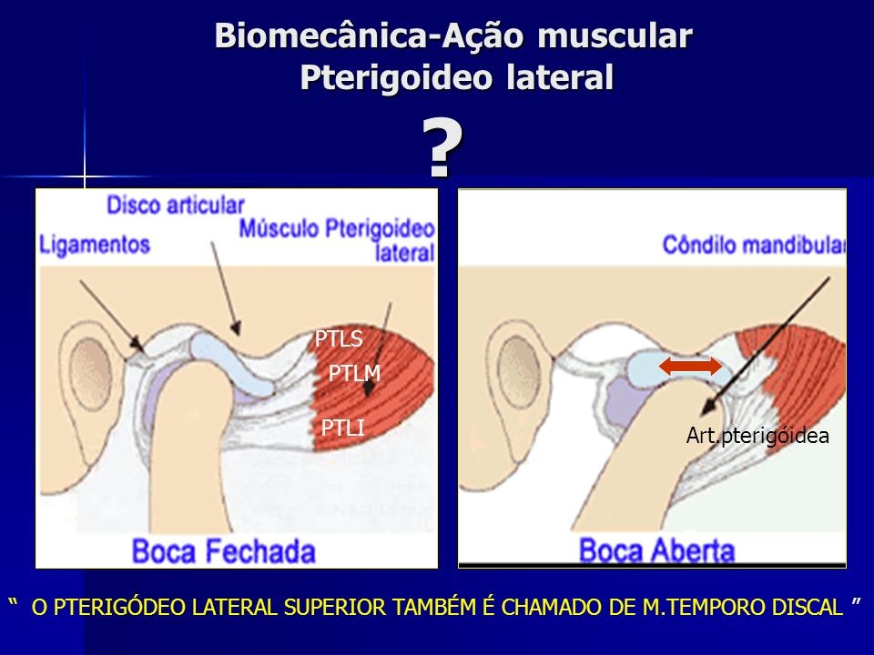 Biomecânica-Ação muscular Pterigoideo lateral