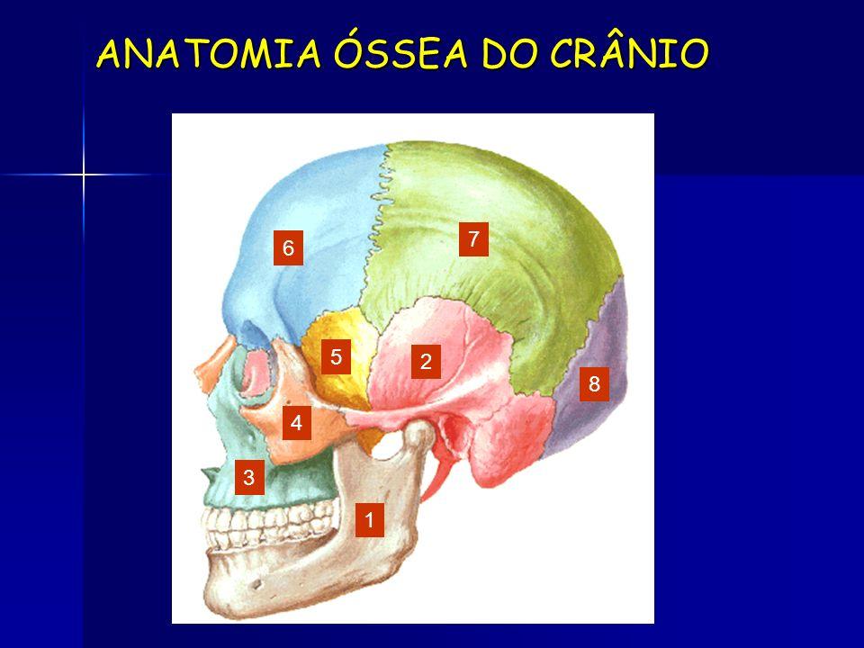 ANATOMIA ÓSSEA DO CRÂNIO