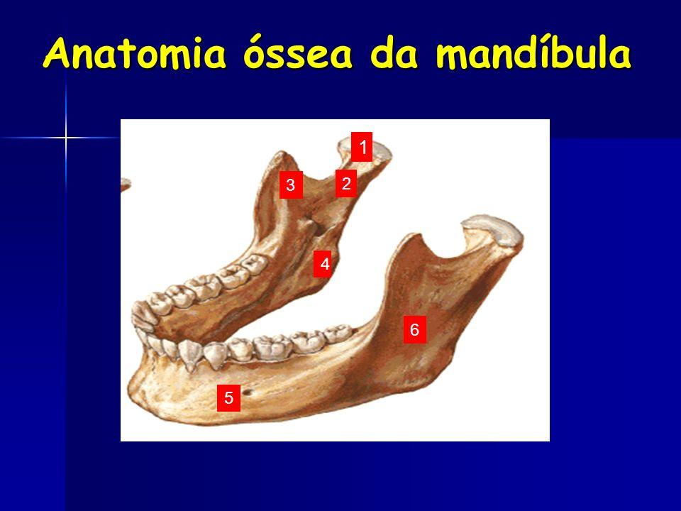 Anatomia óssea da mandíbula