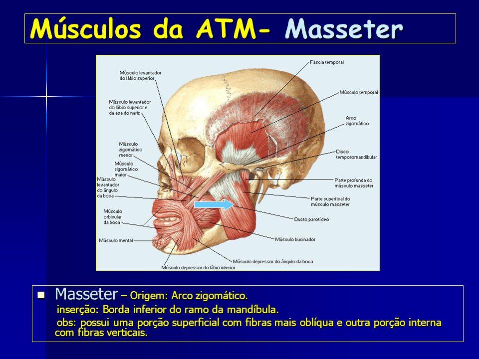 Músculos da ATM- Masseter
