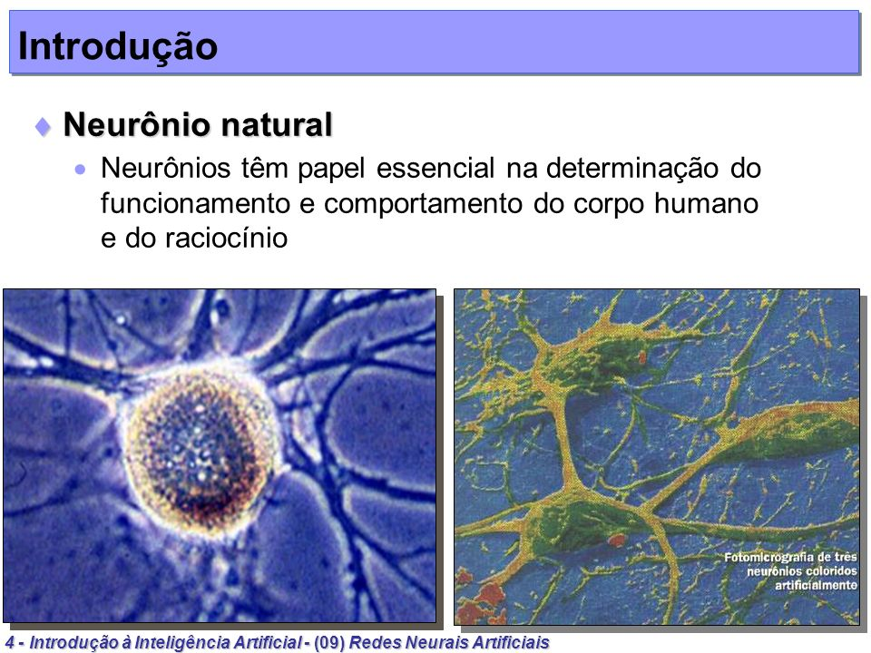 Introdução Neurônio natural