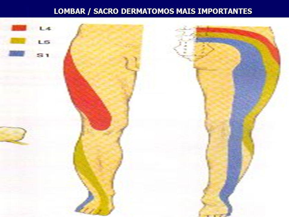 LOMBAR / SACRO DERMATOMOS MAIS IMPORTANTES