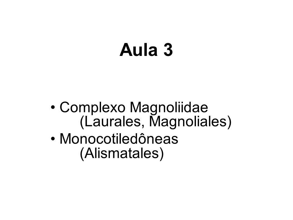 Aula 3 Complexo Magnoliidae (Laurales, Magnoliales)