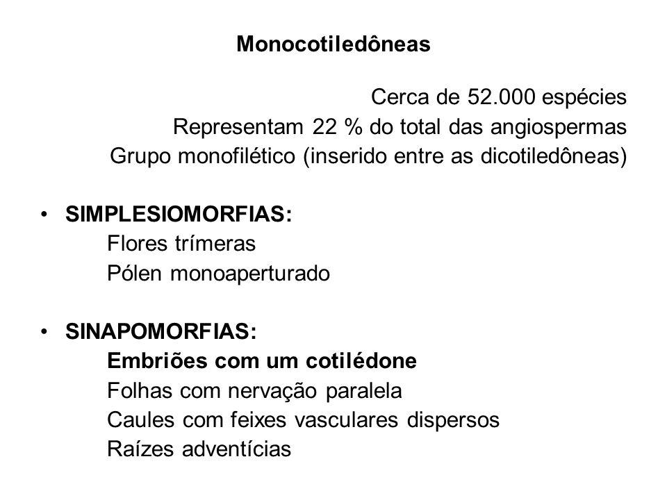 Monocotiledôneas Cerca de 52.000 espécies. Representam 22 % do total das angiospermas. Grupo monofilético (inserido entre as dicotiledôneas)