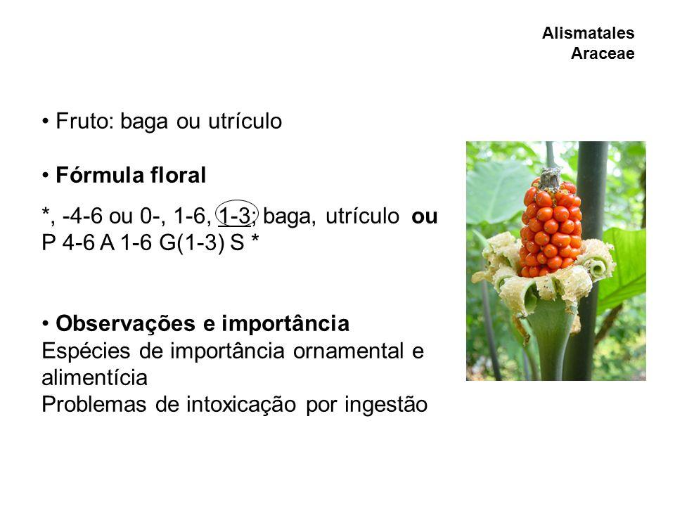 Fruto: baga ou utrículo Fórmula floral