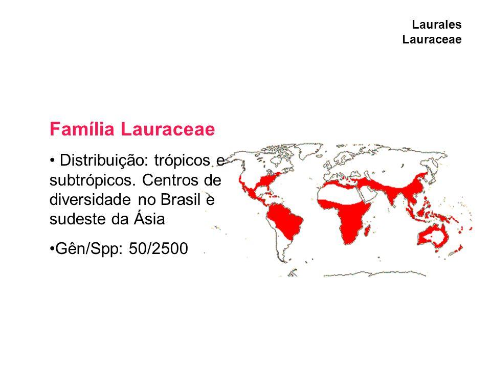 Laurales Lauraceae Família Lauraceae. Distribuição: trópicos e subtrópicos. Centros de diversidade no Brasil e sudeste da Ásia.