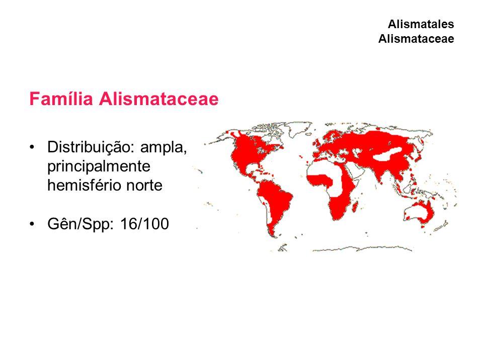 Família Alismataceae Distribuição: ampla, principalmente