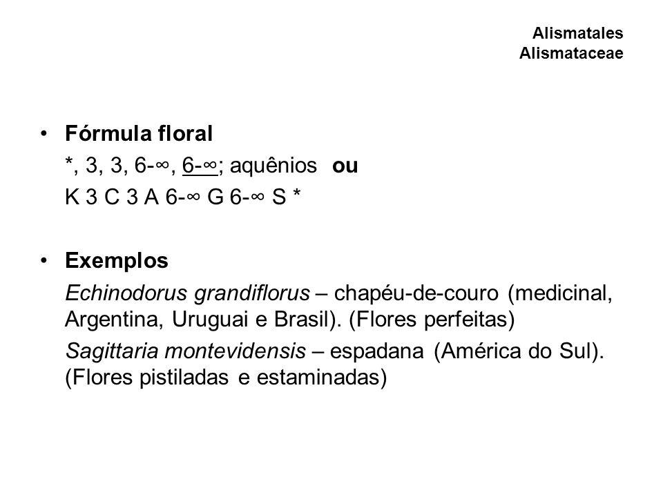 Fórmula floral *, 3, 3, 6-∞, 6-∞; aquênios ou K 3 C 3 A 6-∞ G 6-∞ S *