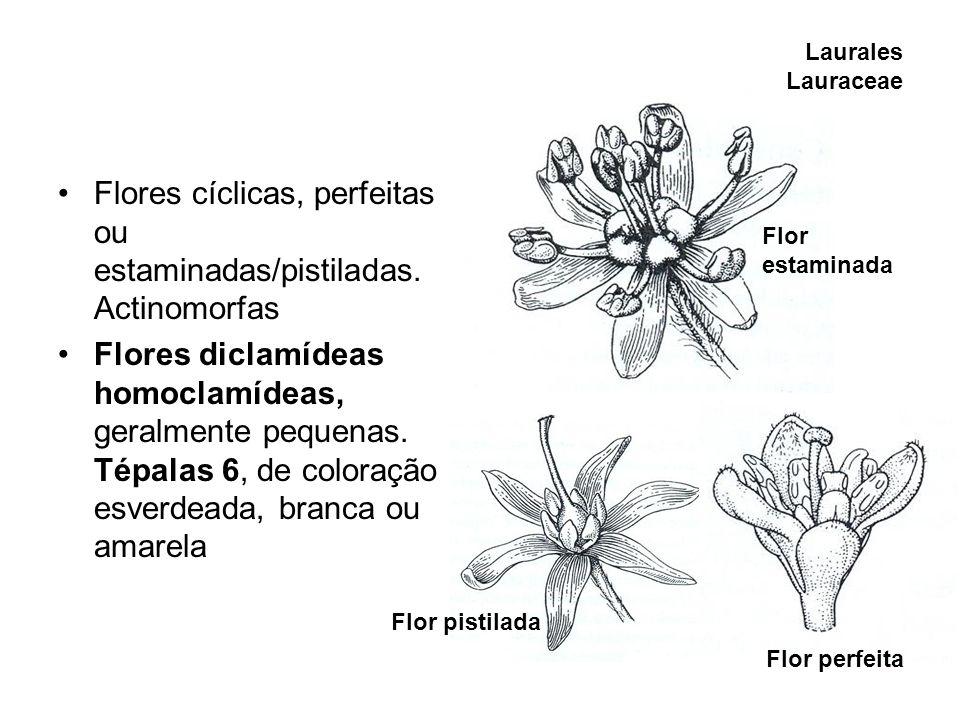Flores cíclicas, perfeitas ou estaminadas/pistiladas. Actinomorfas