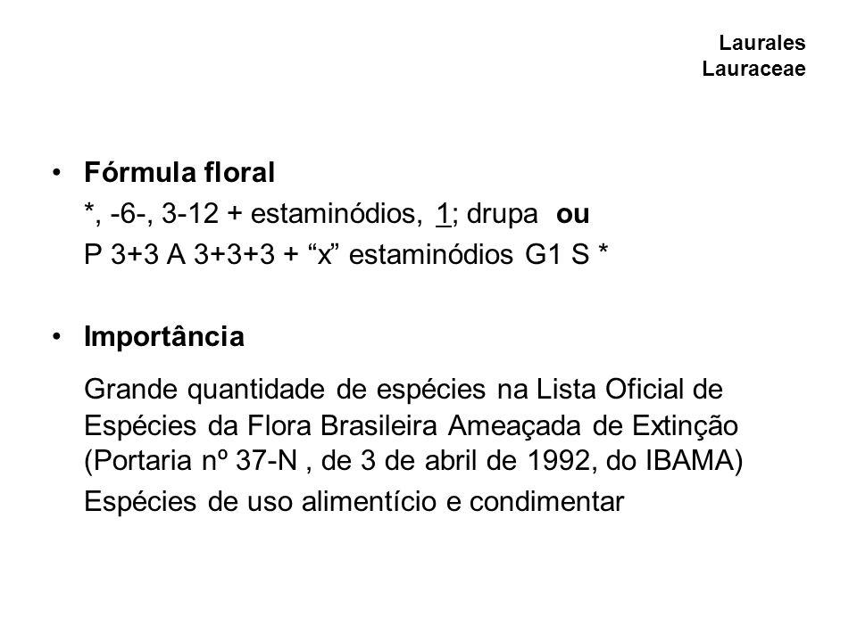 Laurales Lauraceae Fórmula floral. *, -6-, 3-12 + estaminódios, 1; drupa ou. P 3+3 A 3+3+3 + x estaminódios G1 S *