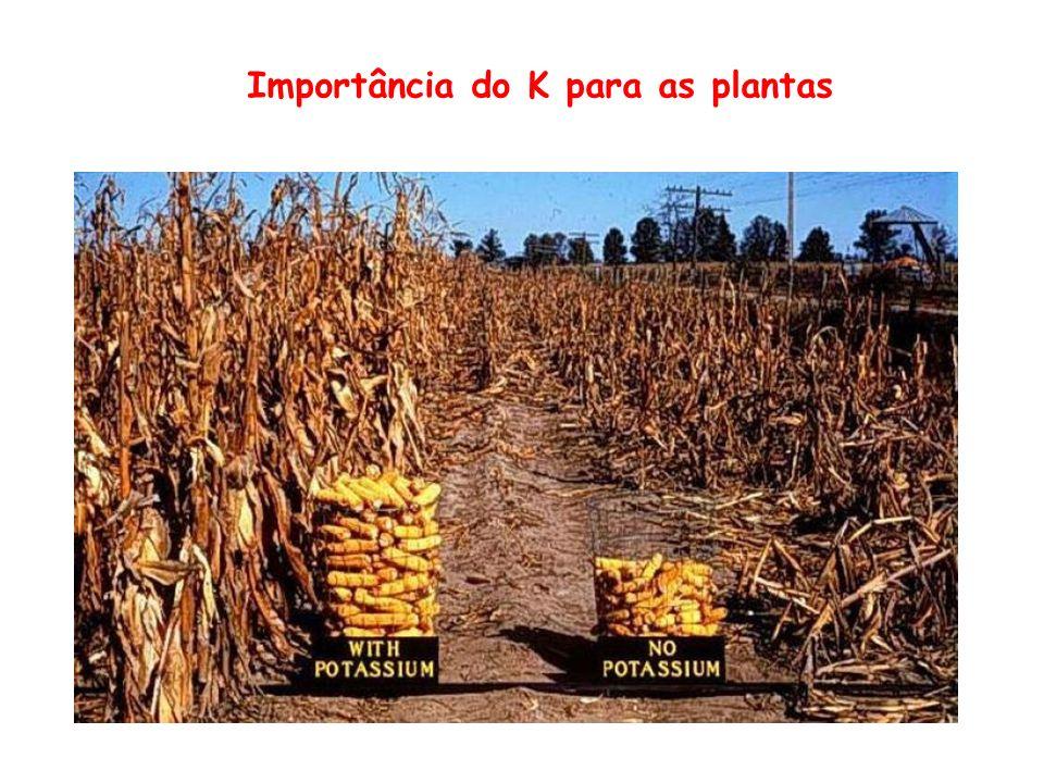 Importância do K para as plantas