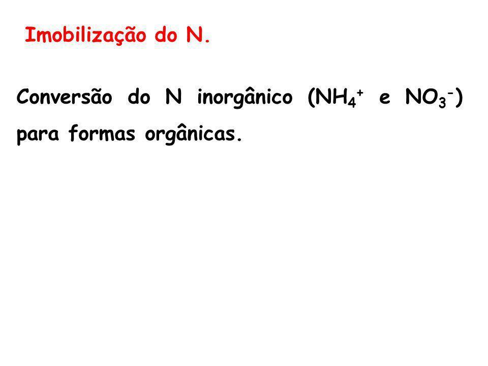 Imobilização do N. Conversão do N inorgânico (NH4+ e NO3-) para formas orgânicas.