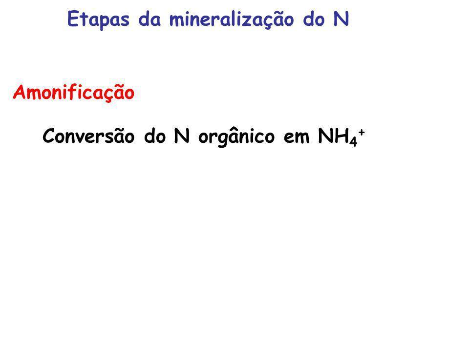 Etapas da mineralização do N