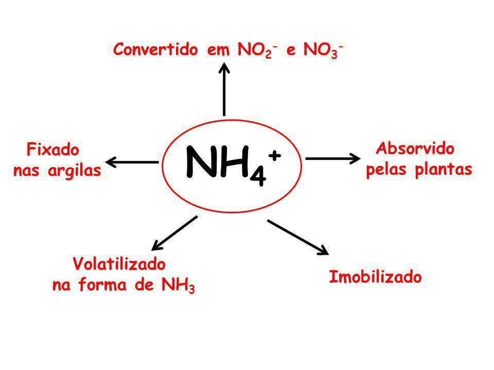 NH4+ Convertido em NO2- e NO3- Fixado Absorvido nas argilas