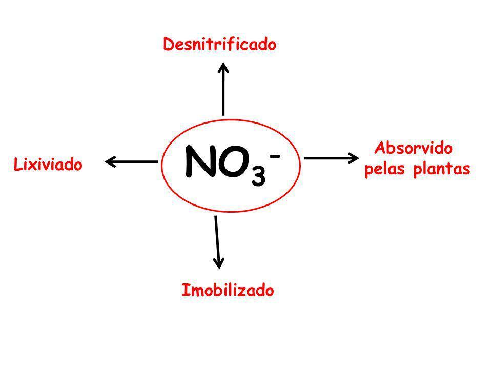 Desnitrificado NO3- Absorvido pelas plantas Lixiviado Imobilizado