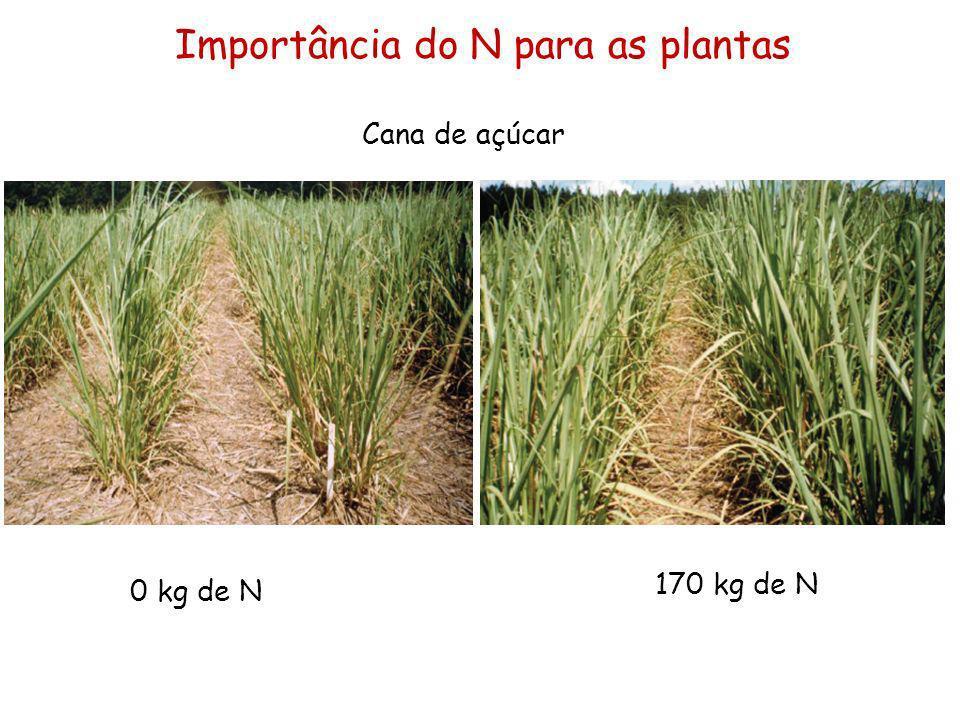 Importância do N para as plantas