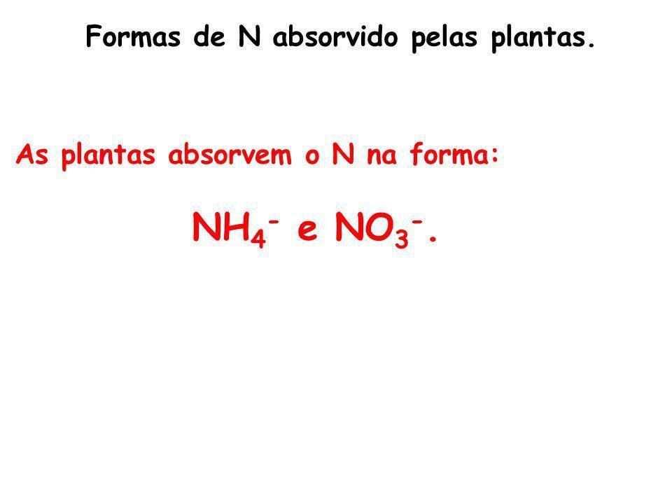 NH4- e NO3-. Formas de N absorvido pelas plantas.