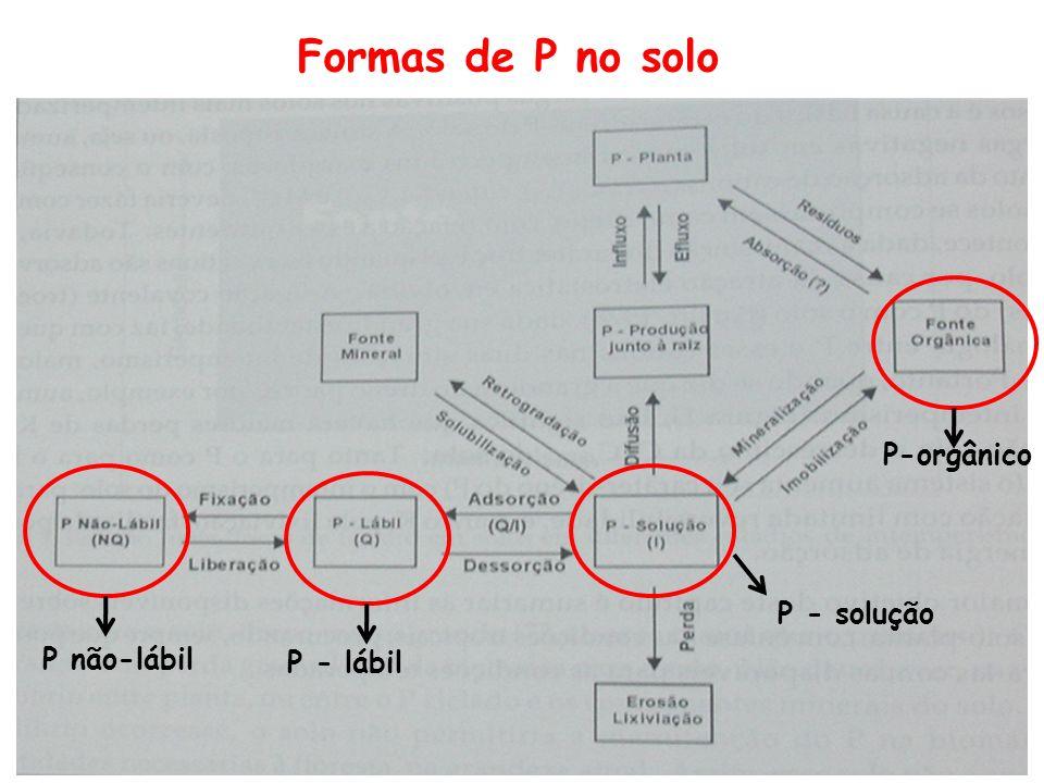 Formas de P no solo P-orgânico P - solução P não-lábil P - lábil
