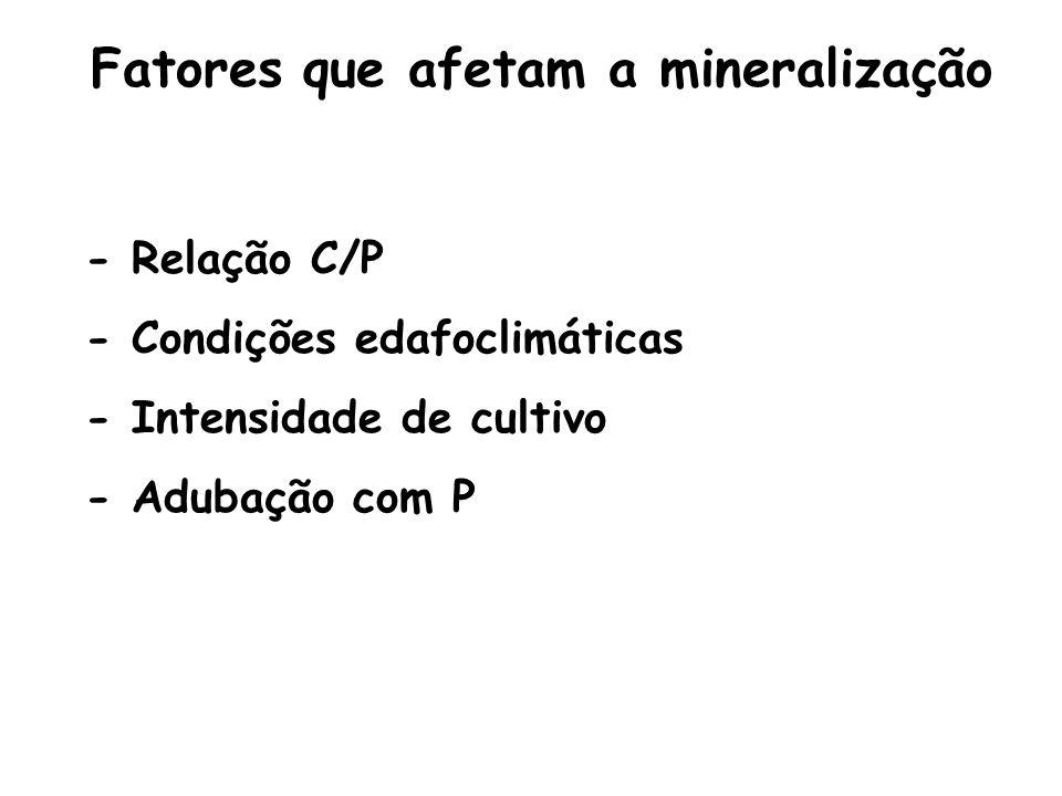 Fatores que afetam a mineralização