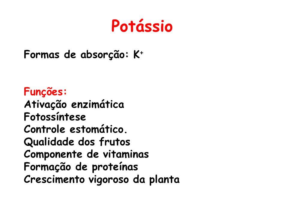 Potássio Formas de absorção: K+ Funções: Ativação enzimática