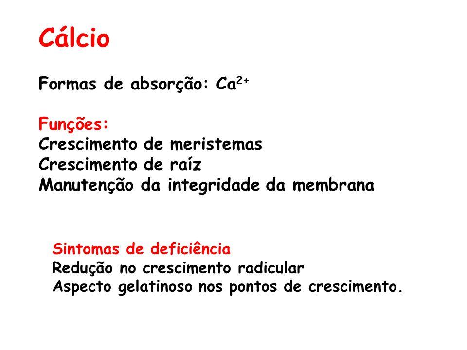 Cálcio Formas de absorção: Ca2+ Funções: Crescimento de meristemas